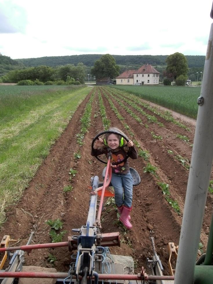 Das Häufeln der Kartoffeln mit der Häufelmaschine